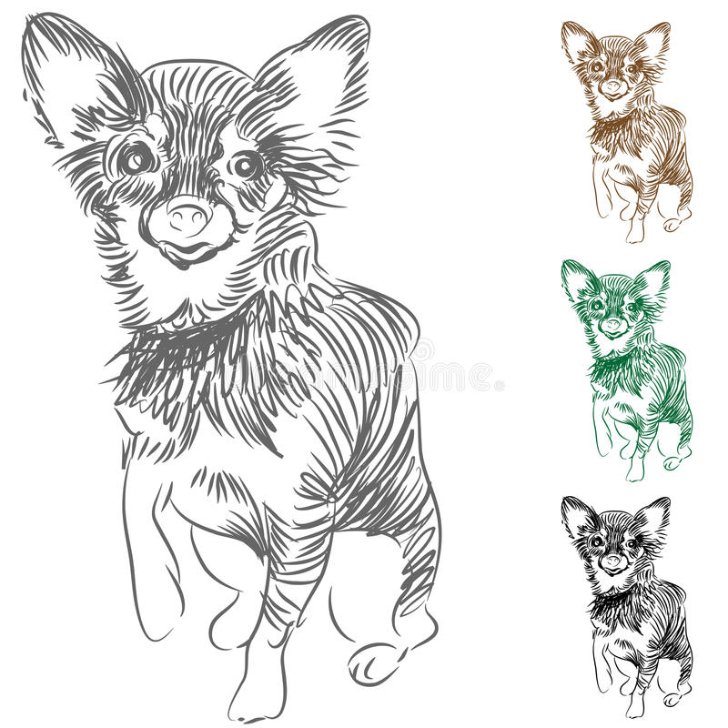 Download Chihuahua Dog Drawing stock vector. Illustration of small - 19950898