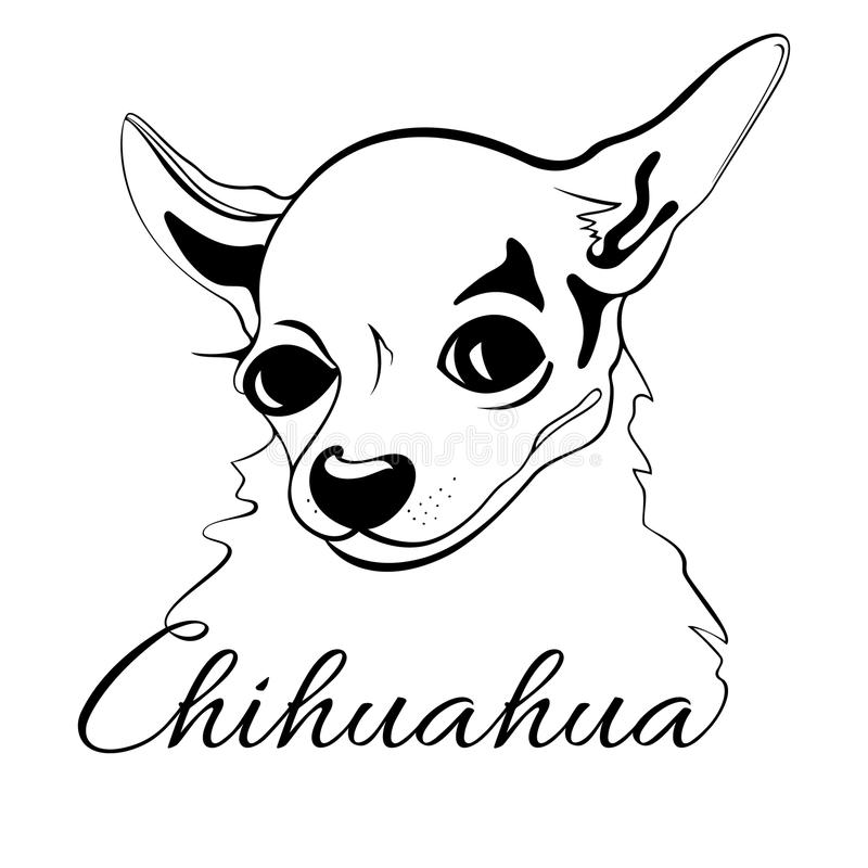 Chihuahua dog head. Outline drawing of the dog's head and the words Chihuahua vector illustration