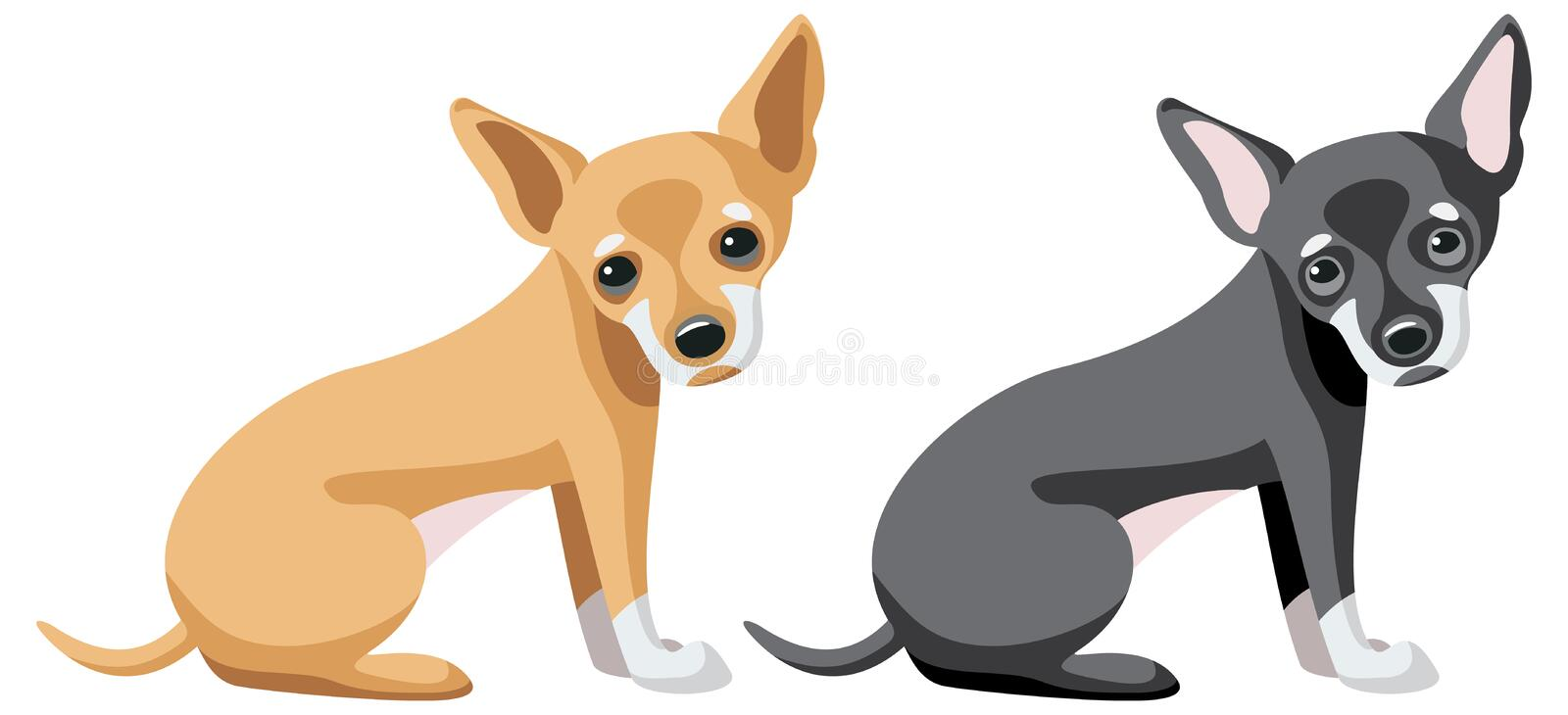 Chihuahua dogs in two different colors. Vector illustration royalty free illustration