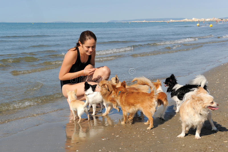 Chihuahua e ragazza sulla spiaggia immagini stock