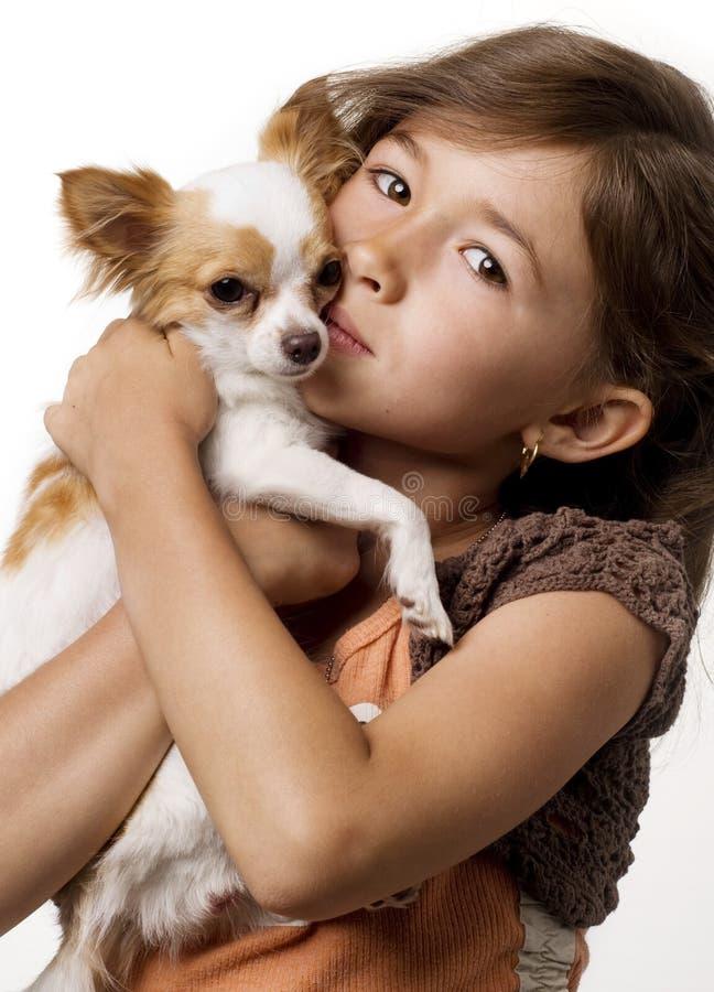 Chihuahua erhalten eine Umarmung vom kleinen Mädchen lizenzfreie stockfotografie