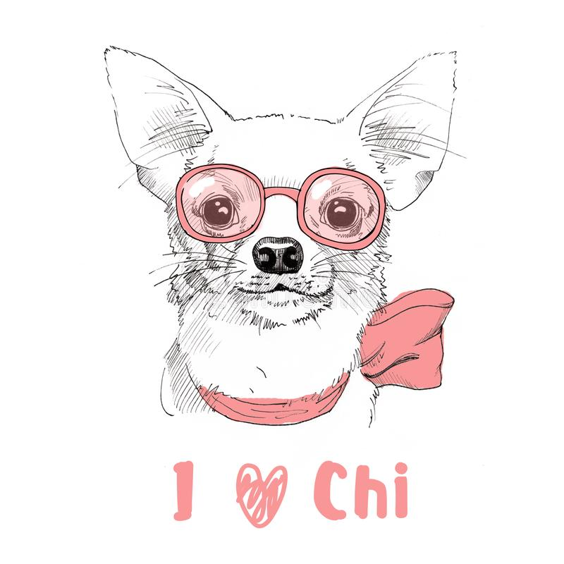 Chihuahua hand drawn portrait with glasses. White Chihuahua hand drawn portrait with glasses vector illustration