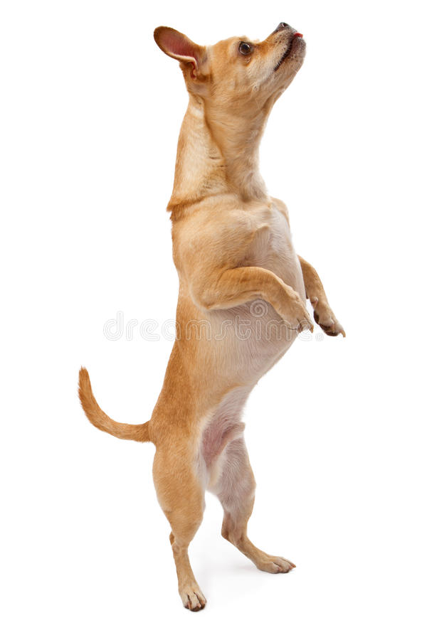 Dog Training Treats India