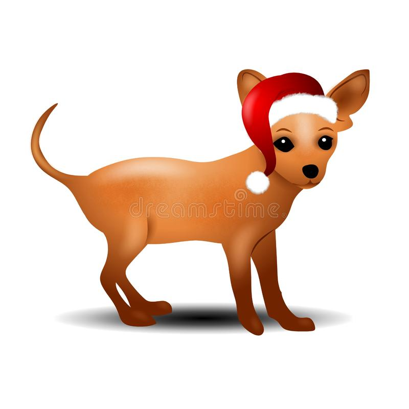 Chihuahua in Santa Hat stock images