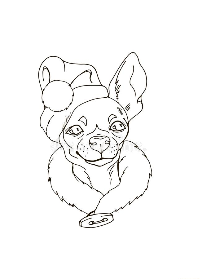 Portrait of dog in santa hat. Chihuahua in santa hat, pet darling in christmas costume, portrait of dog, coloring, vector illustration stock illustration