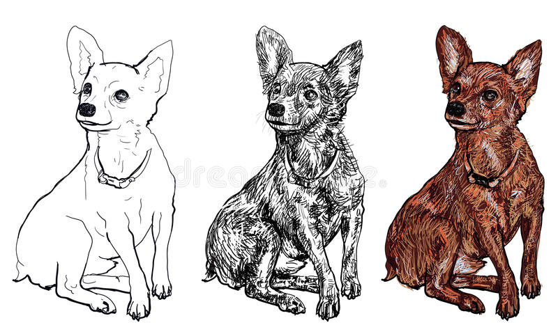 The of Chihuahua. In 3 styles vector illustration