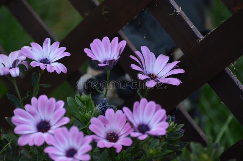 Chihuahua und Blumen lizenzfreie stockfotografie