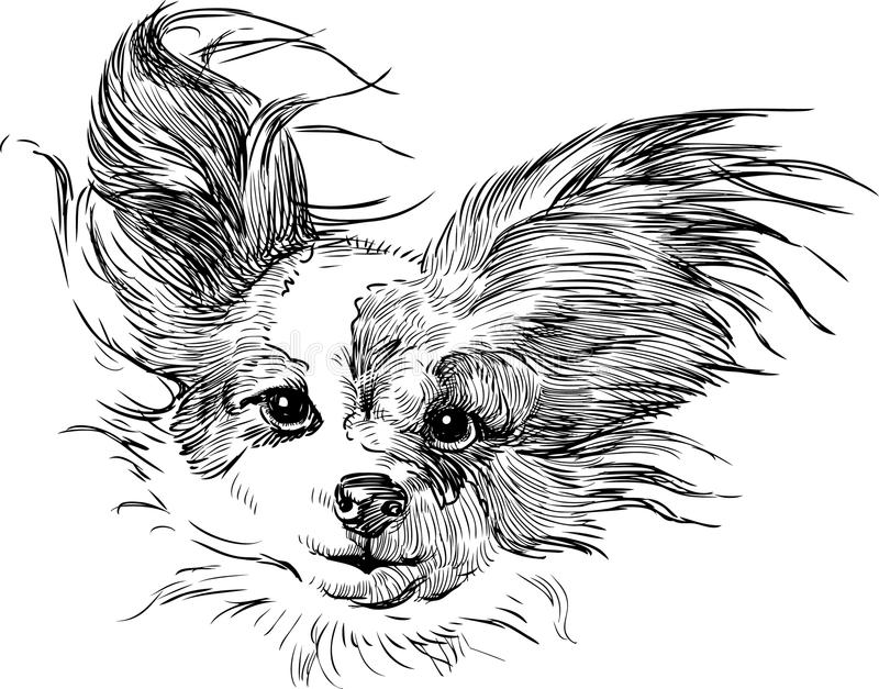 Chihuahua. Vector image of a head of a chihuahua stock illustration