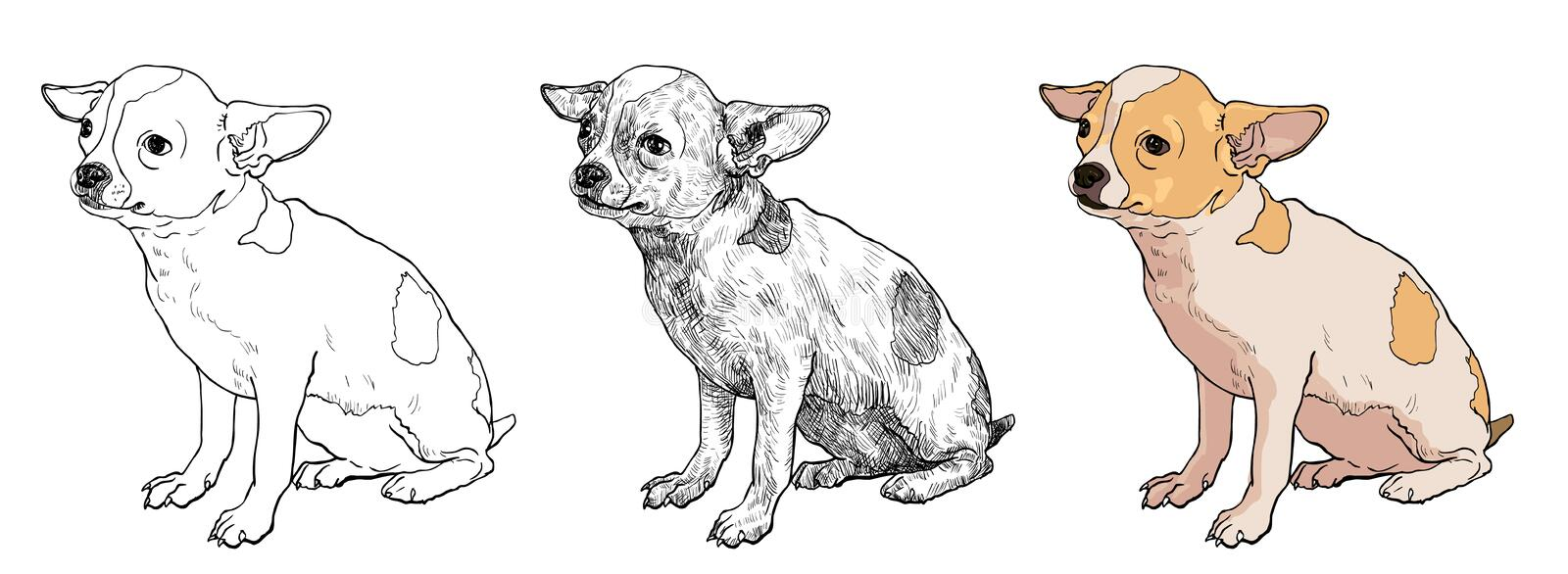 Chihuahua. The vector of chihuahua on sitting pose stock illustration
