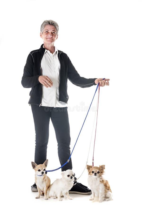Chihuahua, właściciel i posłuszeństwo, zdjęcia royalty free