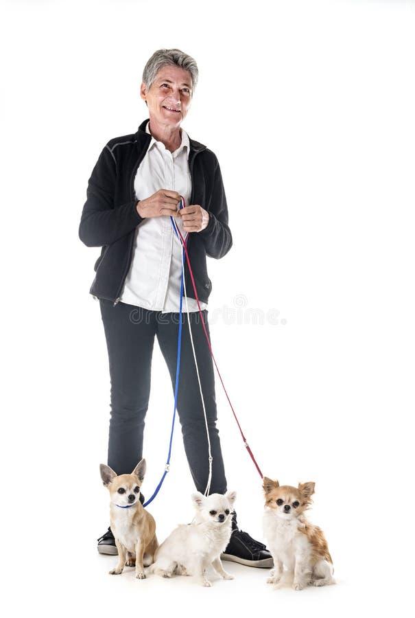 Chihuahua, właściciel i posłuszeństwo, zdjęcie stock