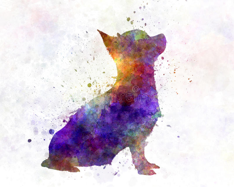Chihuahua in watercolor. Chihuahua artistic abstract in watercolor vector illustration