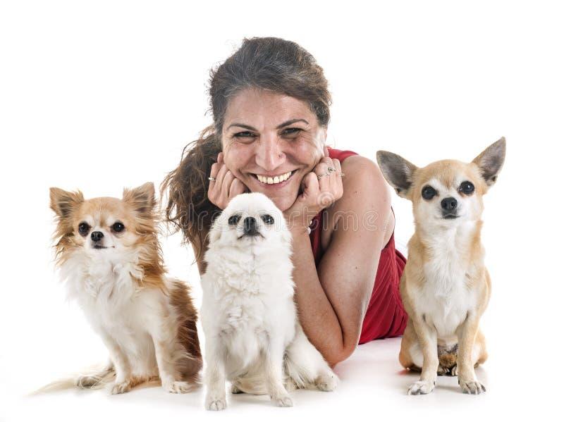 Chihuahuas, dueño y obediencia imagenes de archivo