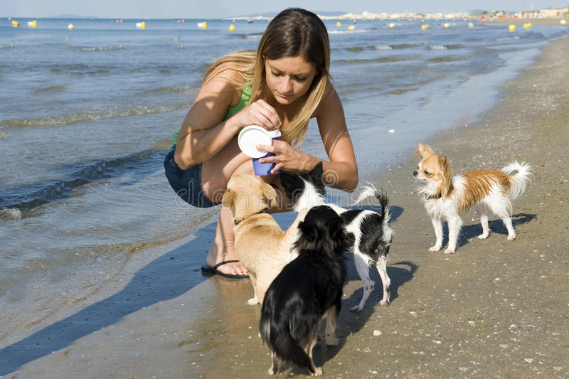 Chihuahuas and girl on the beach stock images