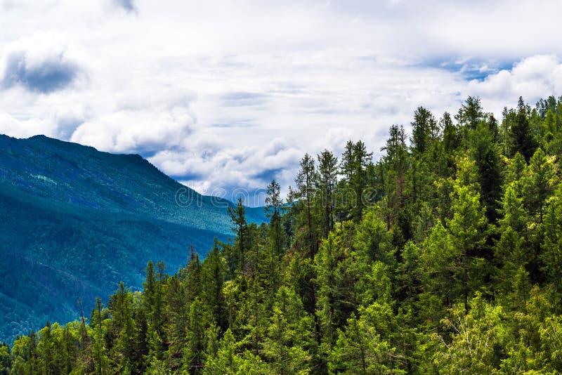 Chike - Taman bergpasserande Altai republik, Ryssland royaltyfri foto