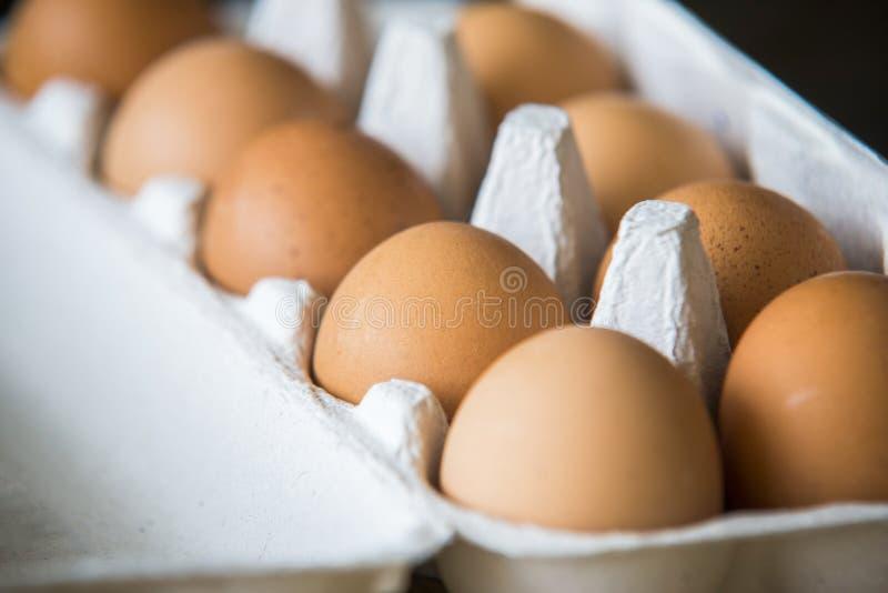 Chiken ägg som packas i en ask royaltyfri bild