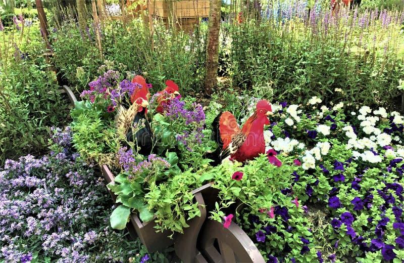 Chiken And Beautiful Plants In Indoor Garden In Singapore Stock ...