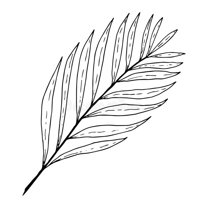 Palm Leaf Outline Stock Illustrations 10 284 Palm Leaf Outline Stock Illustrations Vectors Clipart Dreamstime This leaf can be printed on suitable color paper and cut to the design to leaf templates can be used for multiple purposes. palm leaf outline stock illustrations