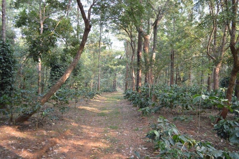 Chikmagalur, estação do monte em Karnataka fotos de stock