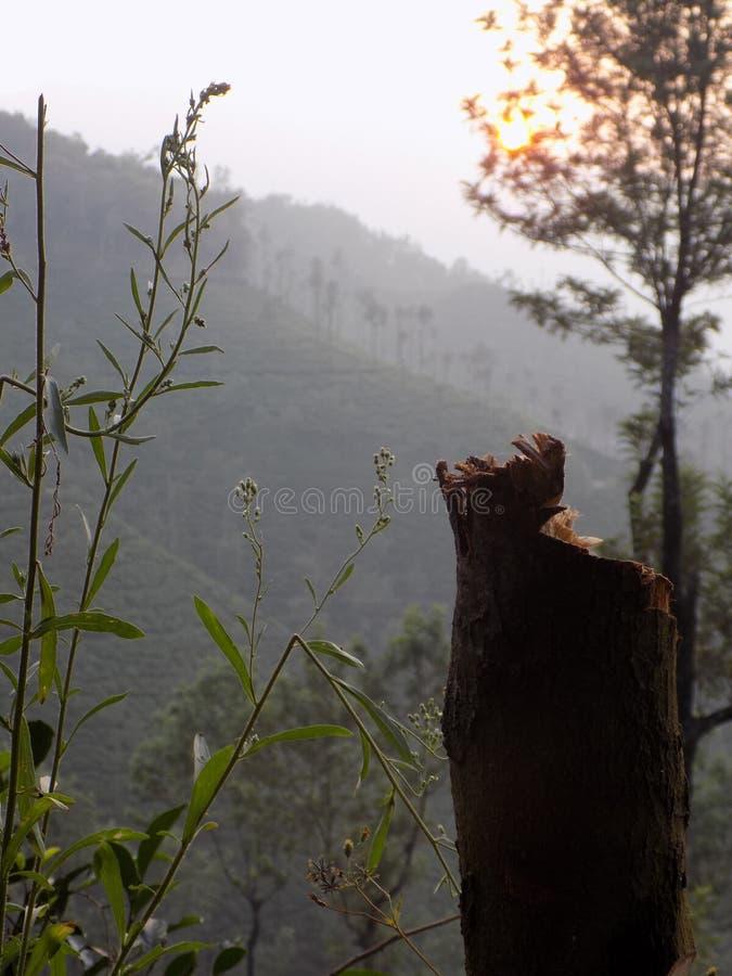 Chikmagalur il Karnataka fotografie stock libere da diritti