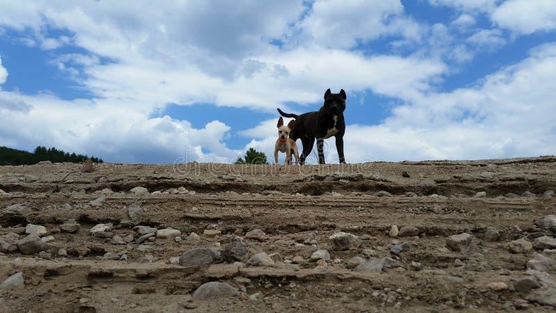 Chiko och Riko hundkapplöpning royaltyfri foto