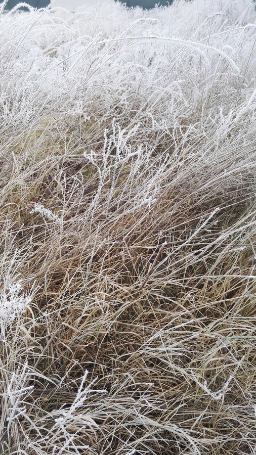 chilblained grass royalty free stock photos
