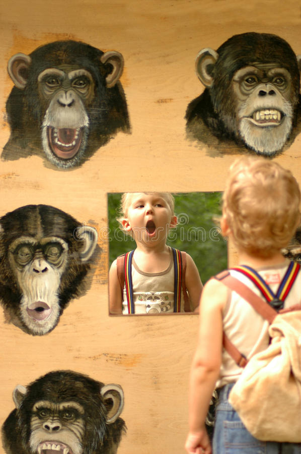 Child and ape. Theory of Evolution. Clear proof stock image
