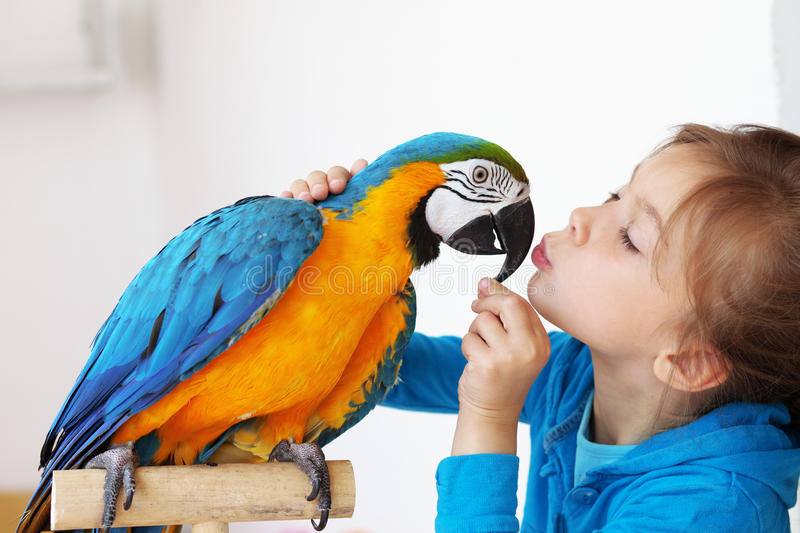 Child with ara parrot. Portrait of a kid girl with her domestic ara parrot