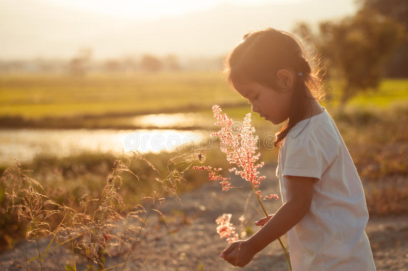 Child asian little girl collect grass flower in the meadow royalty free stock photo