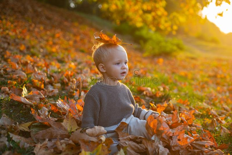 Child autumn leaves background. Warm moments of autumn. Toddler boy blue eyes enjoy autumn. Small baby toddler on sunny. Autumn day. Warmth and coziness. Happy stock image