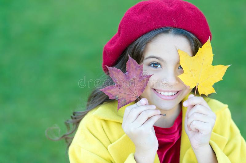 Child with autumn maple leaves walk. Autumn coziness is just around. Little girl excited about autumn season. Tips for. Turning autumn into best season. Kid royalty free stock photo