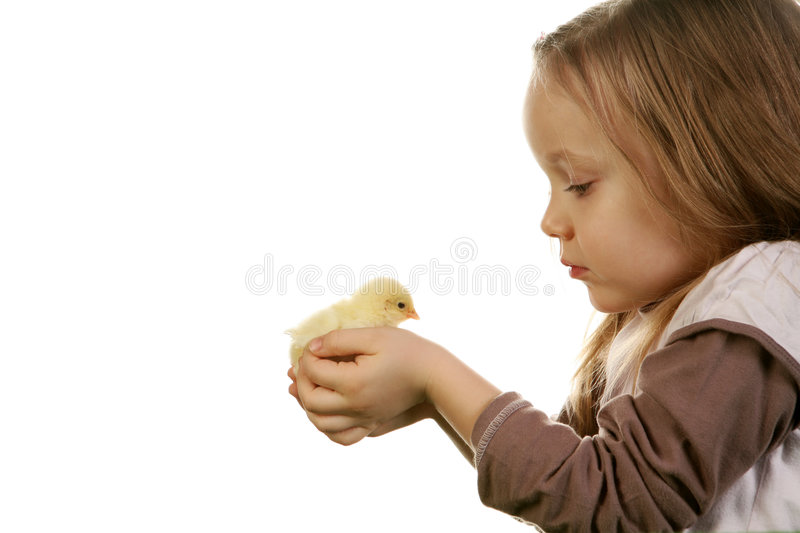 Download Child and baby chicken stock photo. Image of background - 4321416