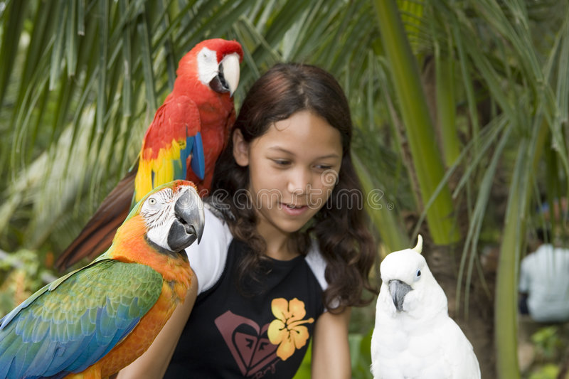 Child with beautiful parrots royalty free stock photos