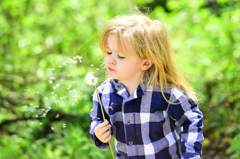 Child blow dandelion in spring or summer park. Boy with flower on idyllic sunny day. Freedom, activity, discovery. Kid with long blond hair in plaid shirt stock images