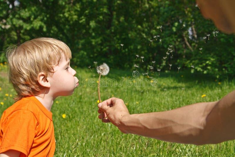 Child blowing dandelion stock photo