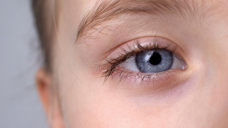 Child with blue eyes looking into camera, vision check, ophthalmology close-up royalty free stock photography