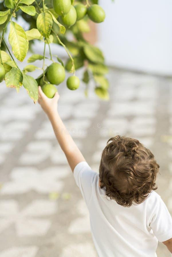 Free Child Catching A Lemon. Stock Photos - 107313323