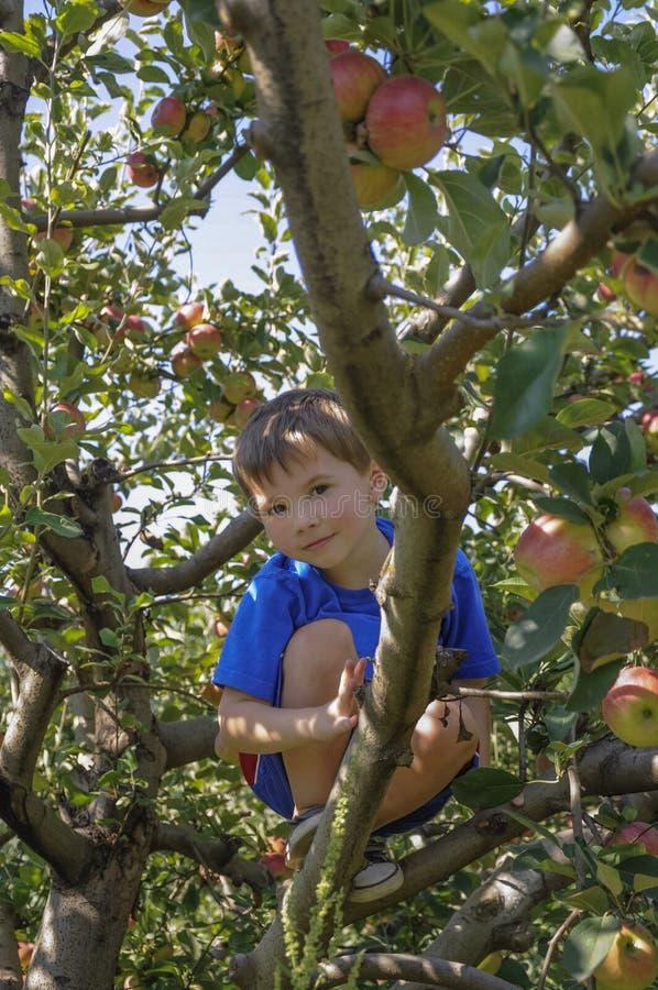 Free Child Climbing Apple Tree Stock Photography - 38789212
