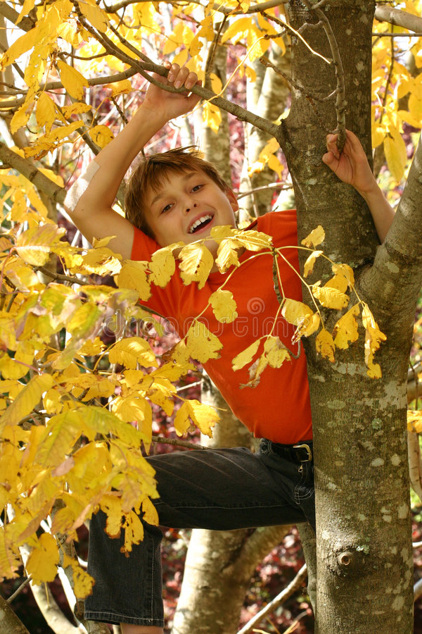 Child climbing up a tree stock photography