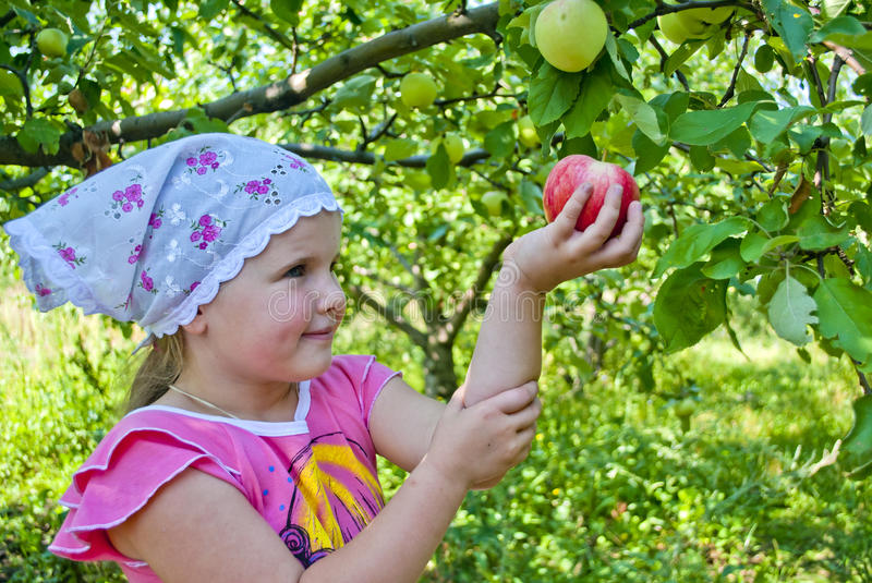 The child collects apples stock image