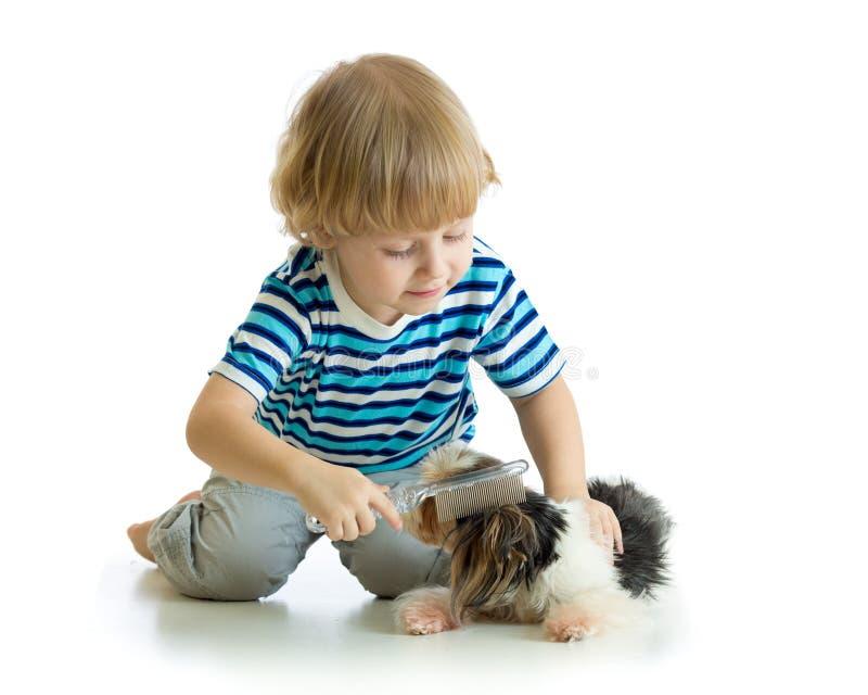 Child comb brushing dog. Isolated on white royalty free stock image