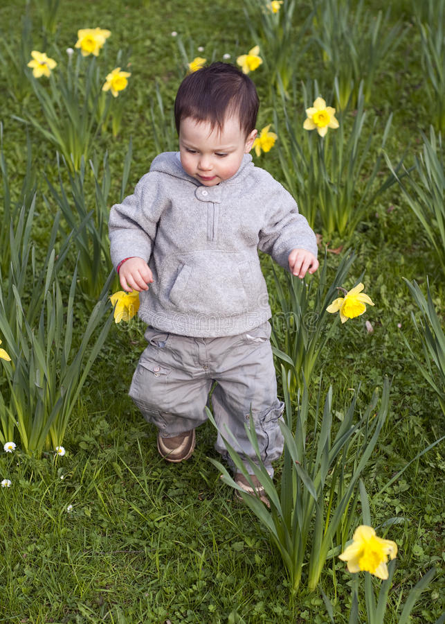 Child in daffodils stock photos