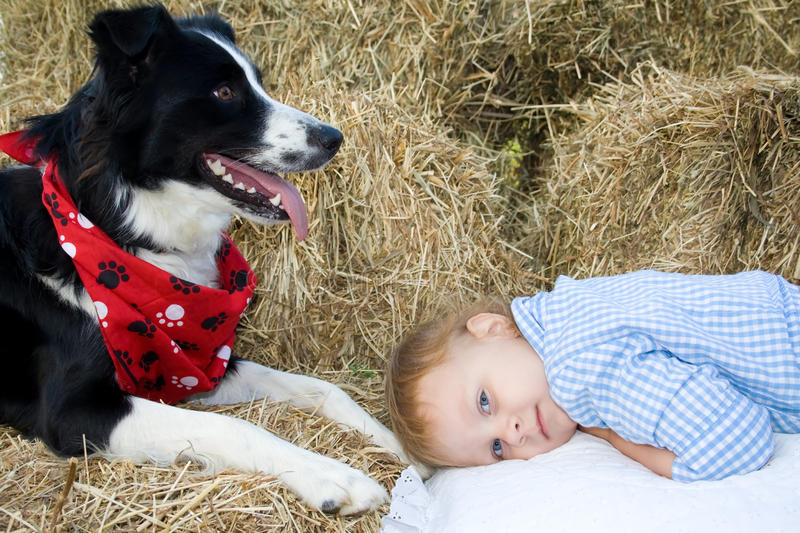 Child and dog. stock images