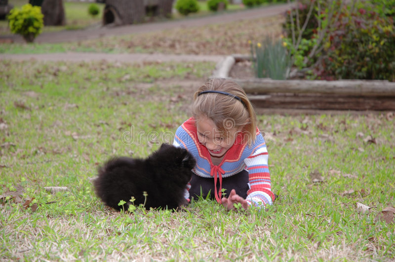 Child and dog. Little girl gets down on the ground and grass to play with this baby puppy pomeranian stock photo