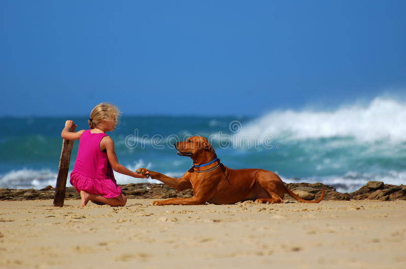 Child dog friendship. A little Caucasian girl child shaking hands with her best canine friend on the beach