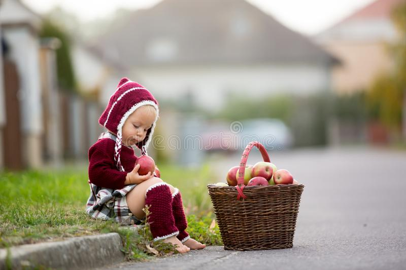 Child eating apples in a village in autumn. Little baby boy play royalty free stock photo