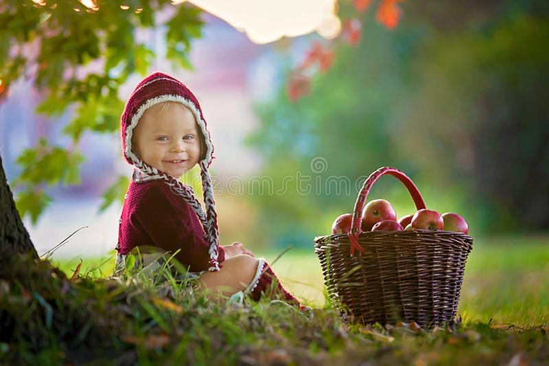 Child with apples in a village in autumn. Little baby boy playing with apples. Kids pick fruit in a basket. Toddler eating fruits at fall harvest. Outdoor fun royalty free stock image