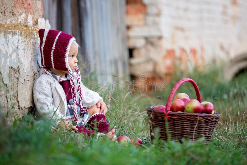Child eating apples in a village in autumn. Little baby boy play stock photos