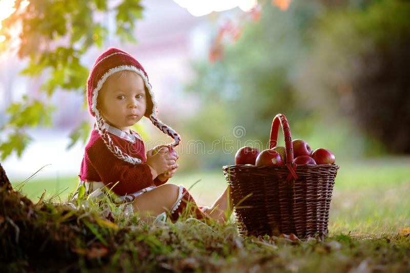 Child eating apples in a village in autumn. Little baby boy play royalty free stock photos