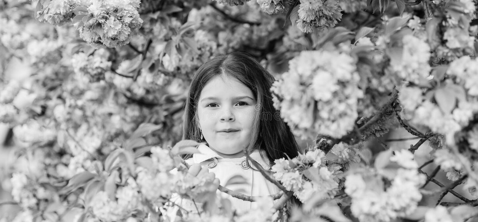Child enjoy life without allergy. Sniffing flowers. Get rid of seasonal allergy. Girl enjoying floral aroma. Pollen. Allergy concept. Kid on pink flowers sakura stock images